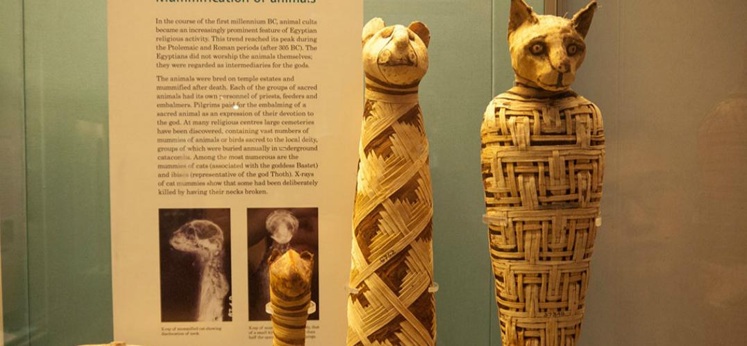 古埃及动物木乃伊行业造假问题非常