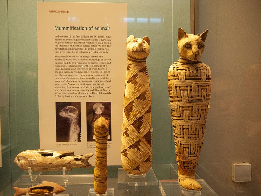 埃及动物木乃伊