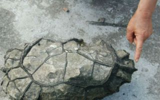 重庆黔江发现天然奇石:乍一看神似乌龟