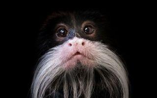 捷克摄影师暗光拍摄独特动物肖像
