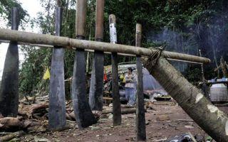 马达加斯加:红木采伐引发的巨大生态灾难