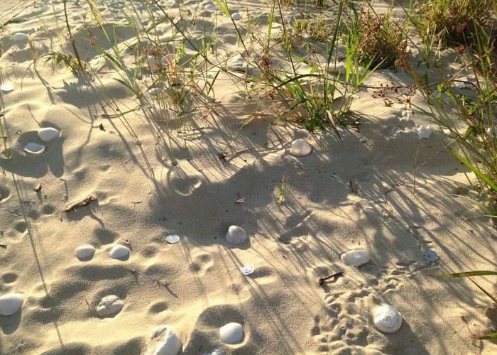 【Art or Not】邀请你来猜:沙滩上的石头哪个才是真正艺术品?