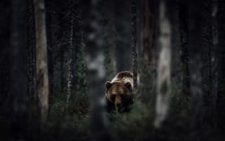 2015国家地理旅行者摄影大赛震撼佳作