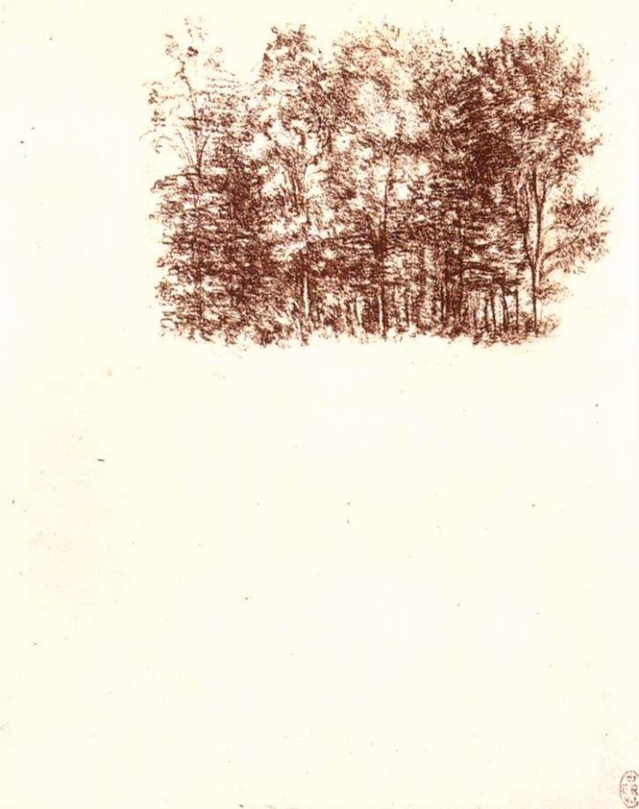 桦木林素描 达芬奇
