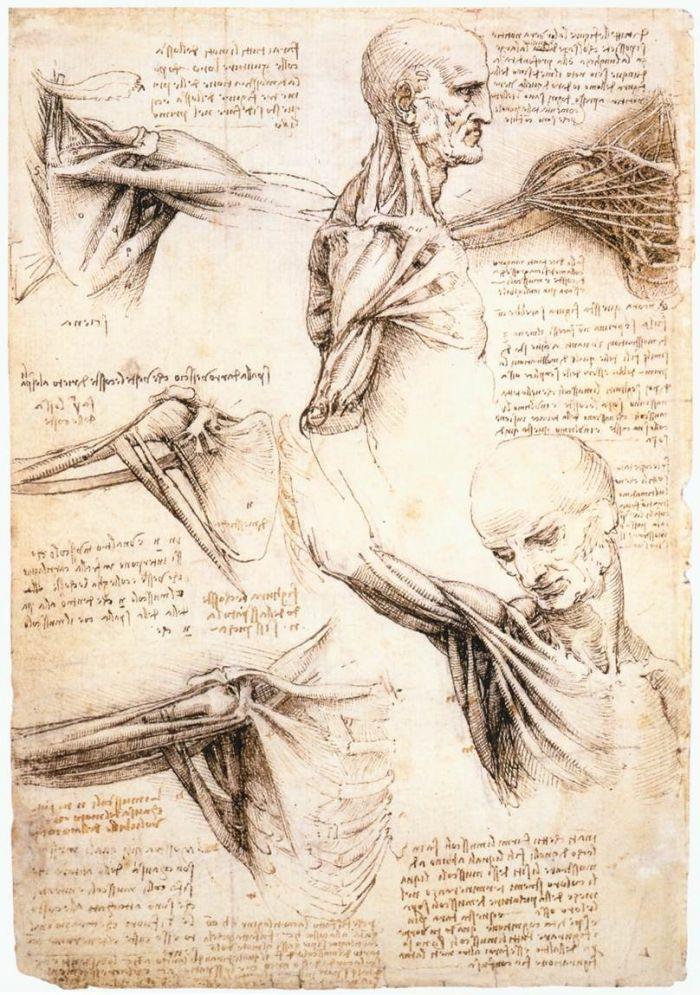 肩关节的解剖学研究 达芬奇