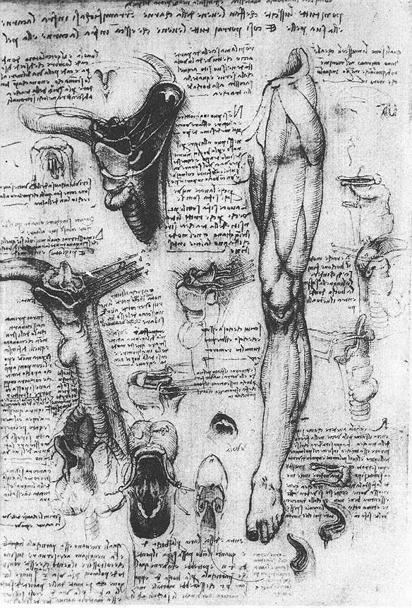 解剖学研究(喉部和腿) 达芬奇