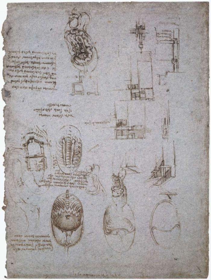 解剖学研究 达芬奇2