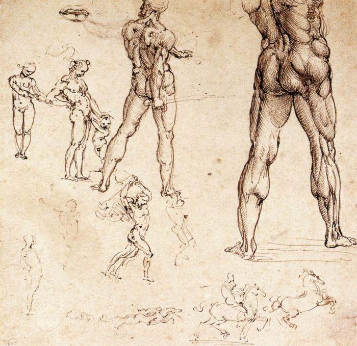 解剖学研究 达芬奇