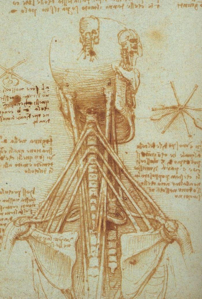 颈部的解剖学研究 达芬奇