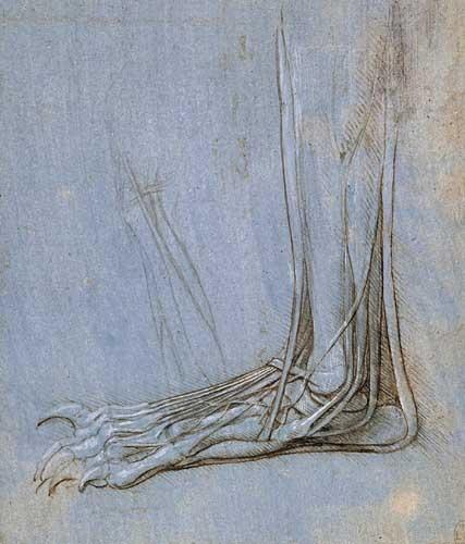 脚的解剖结构 达芬奇