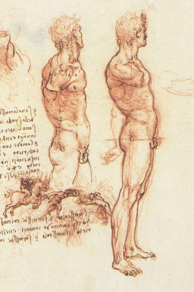 裸体男子侧面图 达芬奇