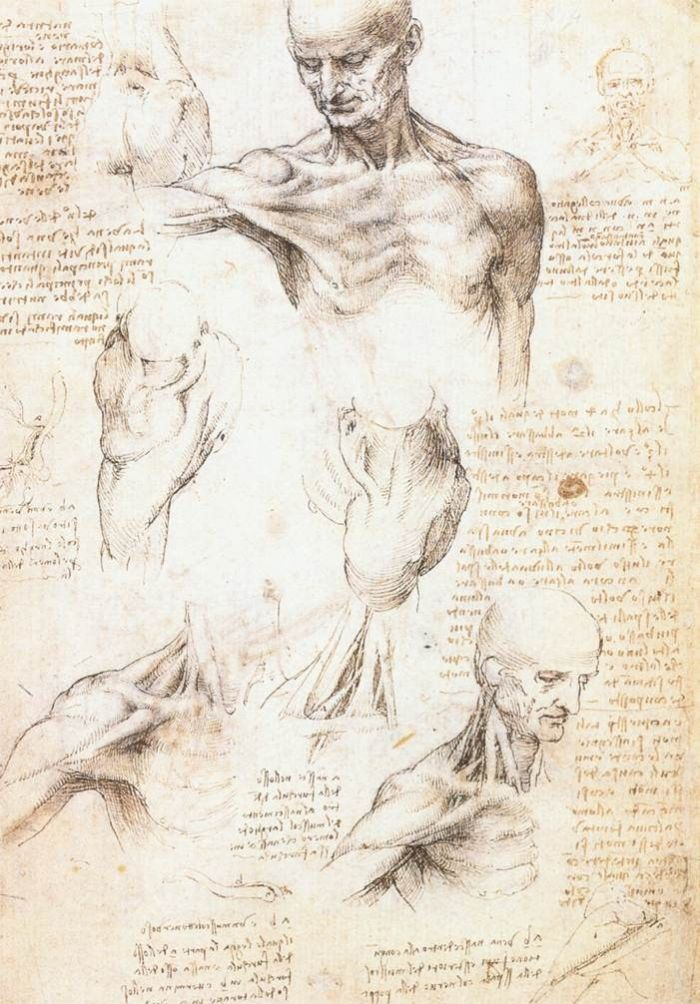 男性肩膀的解剖学研究 达芬奇