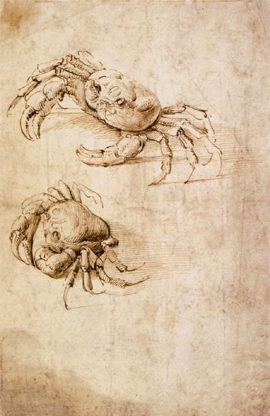 螃蟹草图 达芬奇