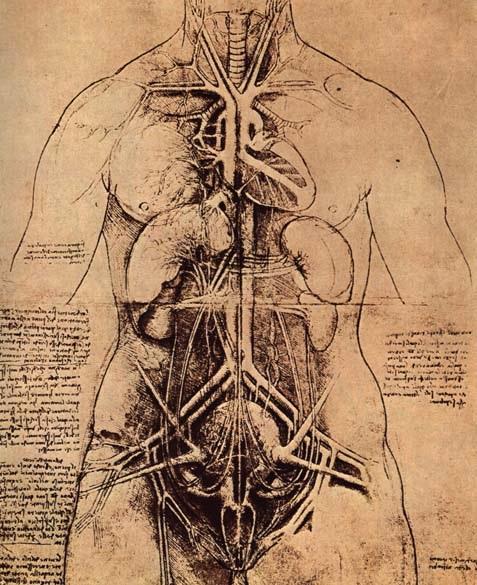 女人的身体解剖学研究 达芬奇