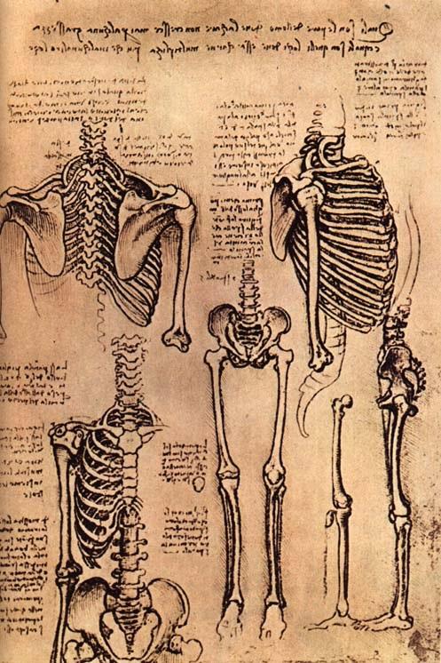 躯干和手臂的骨骼 达芬奇