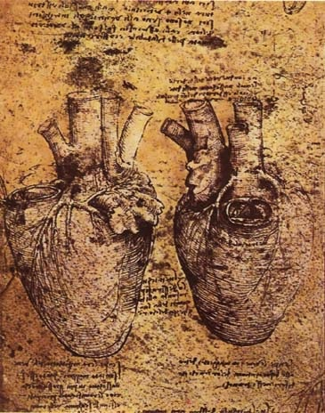心脏和血管 达芬奇