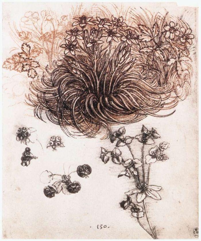 植物 达芬奇2