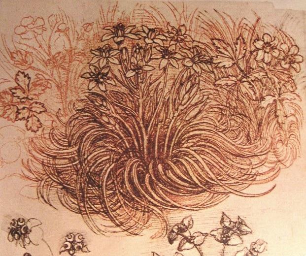 植物 达芬奇