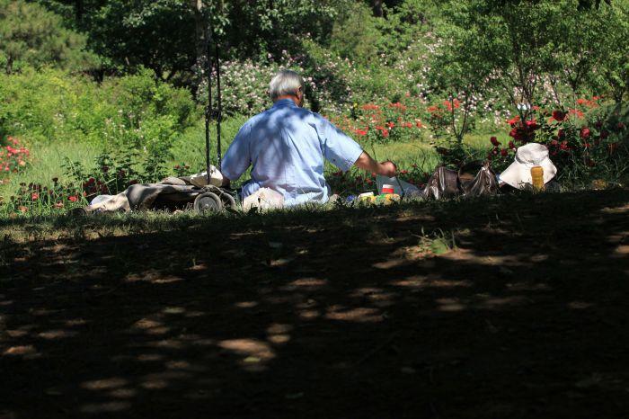 夏季于植物园写生