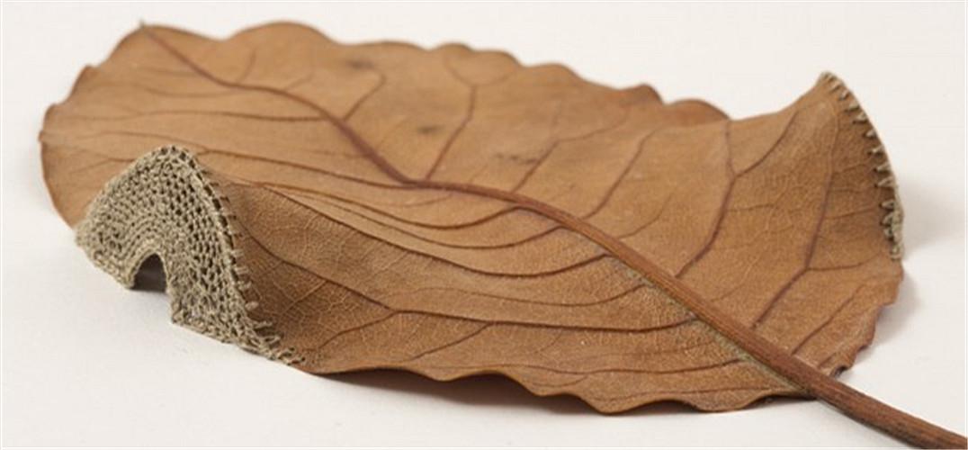浮雕叶子花编织图解
