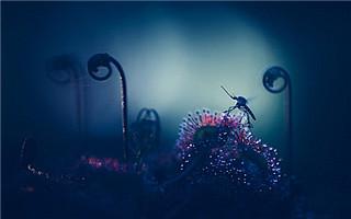 芬兰摄影师的多彩植物的微距摄影