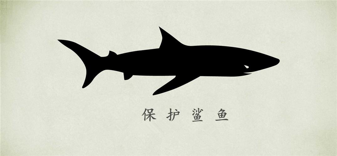 鲨鱼笔画步骤图片