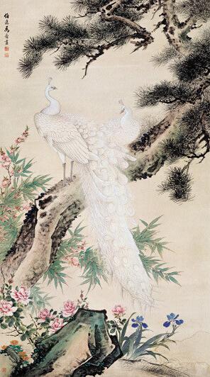 孔雀松树(马晋)