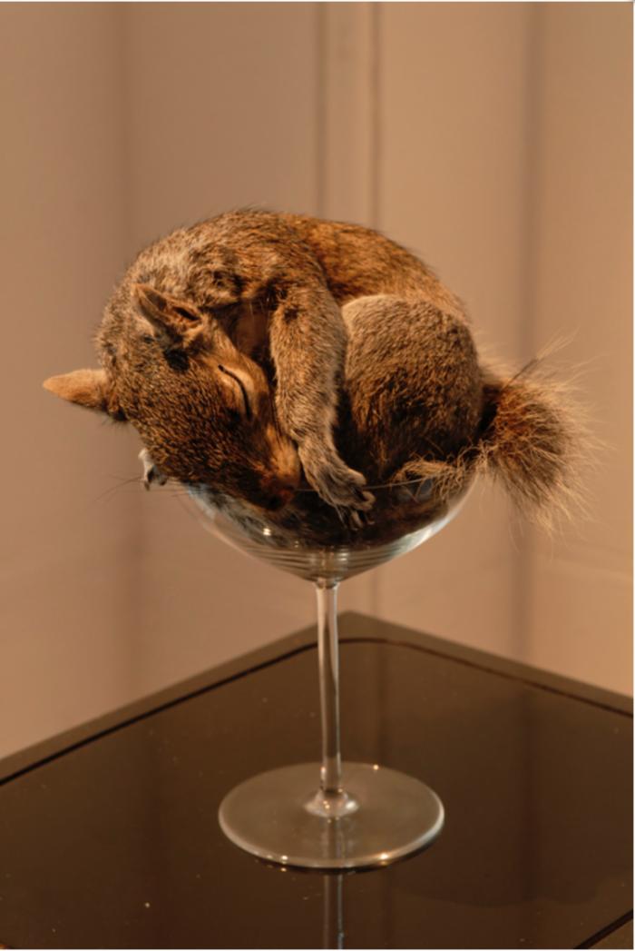 装置艺术:温暖的尸体 以动物标本的名义