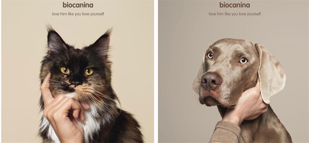 宠物书籍封面设计