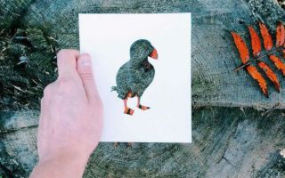 不懂色彩?来看看大自然亲自填色的剪纸画吧