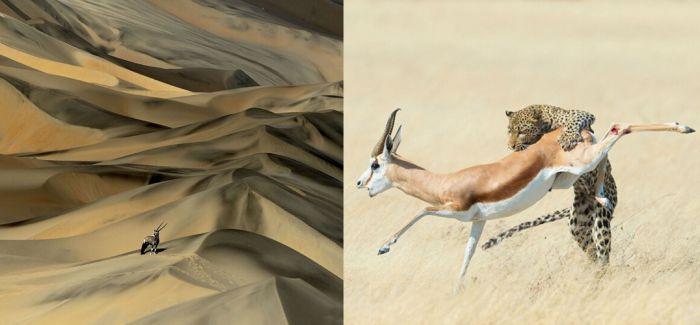 2015野生动物摄影大赛获奖作品出炉