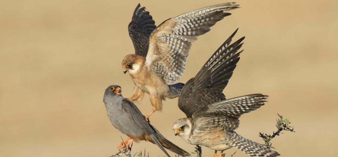 2015年野生动物摄影大赛获奖作品