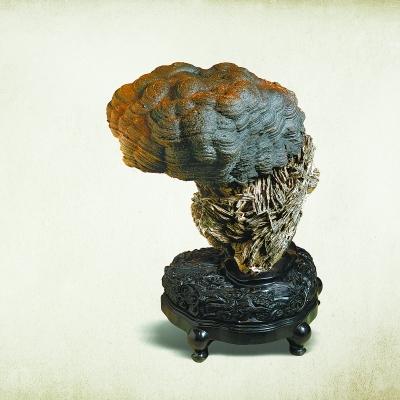 戈壁石《灵芝》