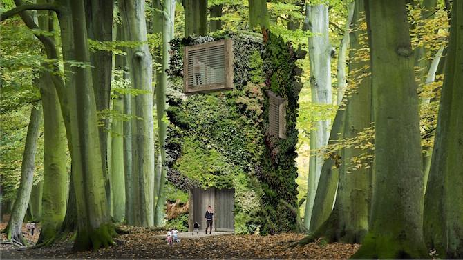 壁纸 风景 森林 植物 桌面 670_377