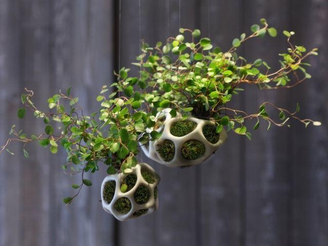 这样做的好处是可以将苔藓等小植物的土壤包裹起来