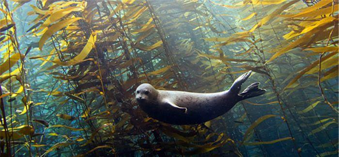 mcburnie:水下动物