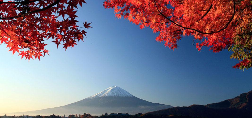 """导读:每年四月,日本都会举行大规模的""""花见""""的活动,人们呼朋唤友从家中赶往那些樱花盛开的地方,欣赏落英缤纷。 半年后秋季中的日本则又换上另一副模样,层林尽染,秋意正浓,秋天在日本,红叶也是美翻了! 北部的北海道,每年9月开始或有红叶出现了,这就是在日本赏红叶的开始了。而日本枫叶红的最盛的时候则是在11月前后。进入11月,日本各地开始举办形式多样的红叶节。 古时的日本把赏红叶称做""""红叶狩""""(狩即狩猎)。他们认为红叶就像一头毛色华丽的野兽,嗅到一丝秋天的气息,便"""