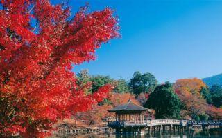 你以为日本只有樱花 其实秋天枫叶也美翻了