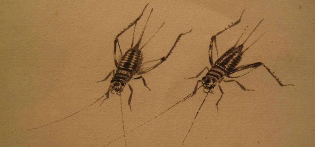 国画蟋蟀画法工笔画法