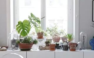 清新慵懒的德国小公寓STUDIO OINK
