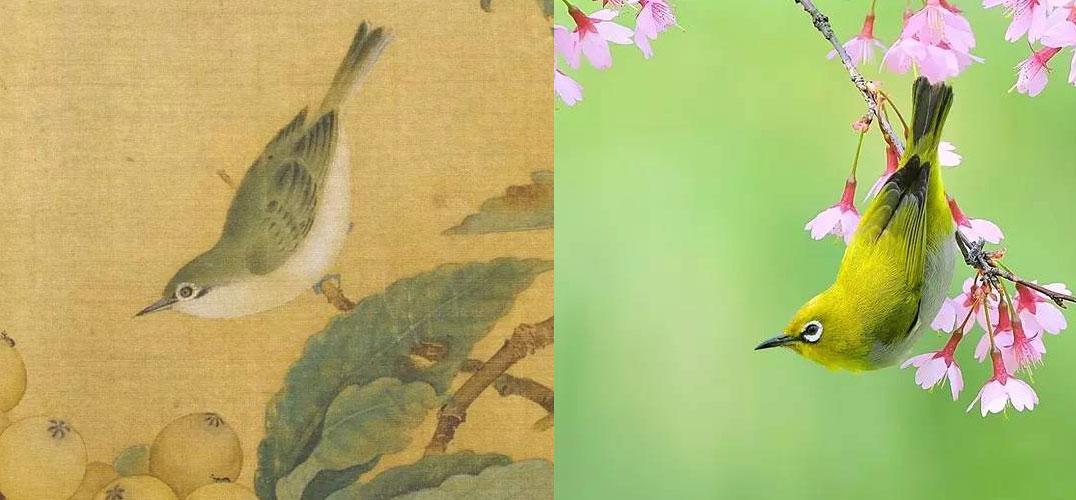 惊人神似——从宋画中飞出的珍禽
