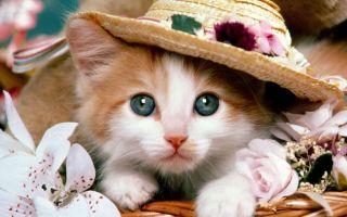 恐袭后Twitter的正确打开方式:用萌猫刷屏