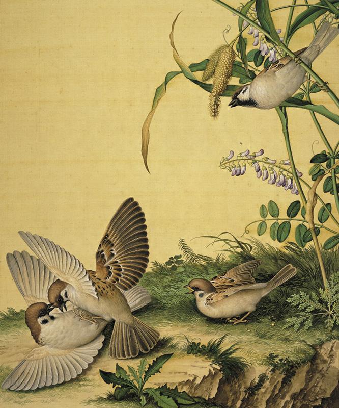 郎世宁《仙萼长春图册-豆花》
