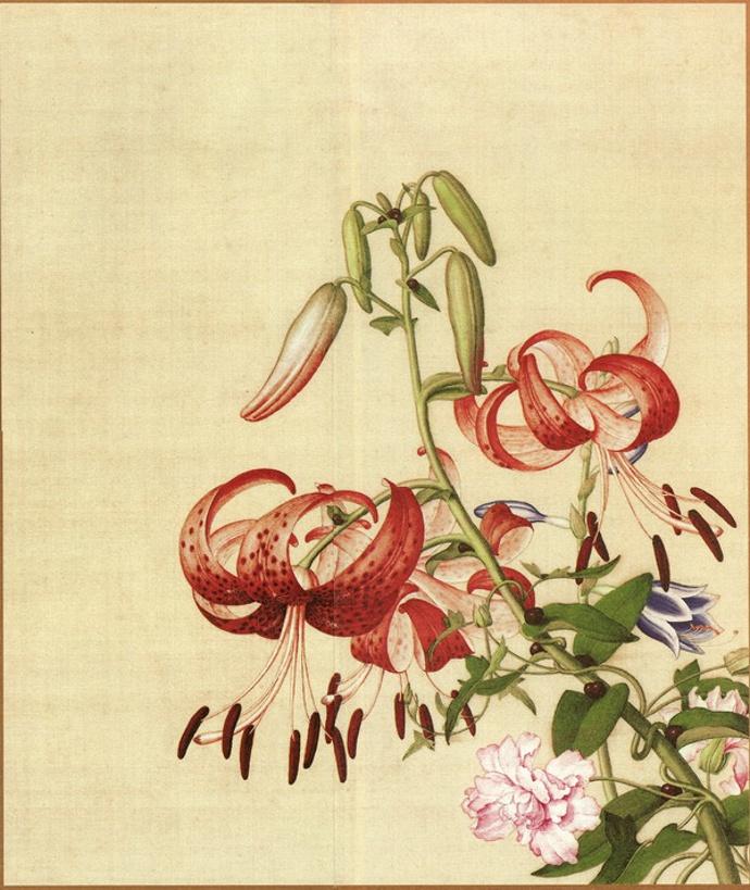 郎世宁《仙萼长春图册-百合纏枝牡丹》