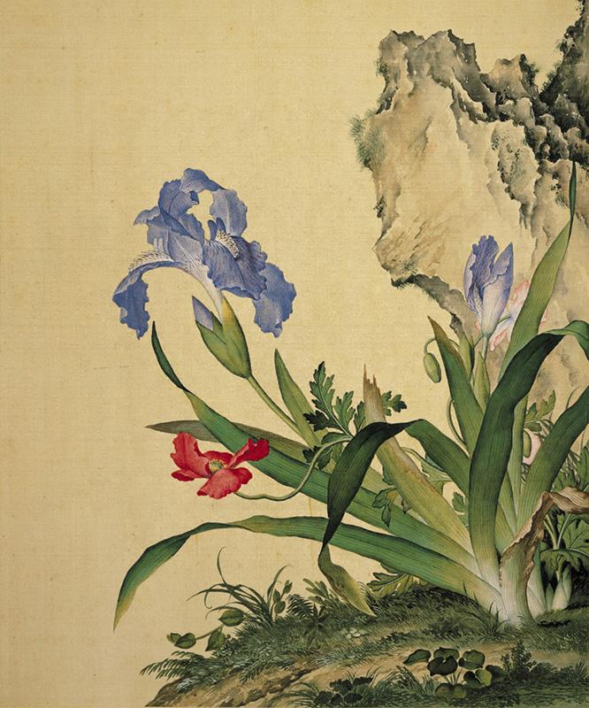 郎世宁《仙萼长春图册-石竹》