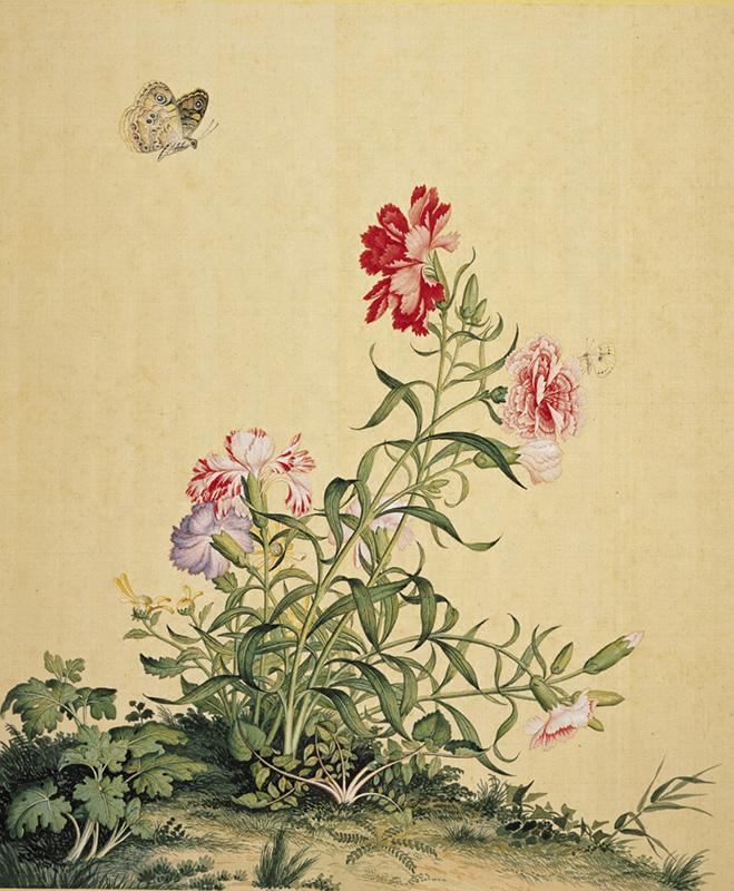 郎世宁《仙萼长春图册—牡丹》