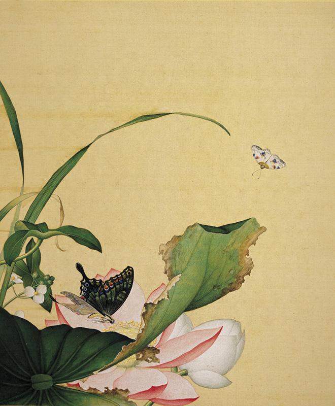 郎世宁《仙萼长春图册-荷花慈姑花》