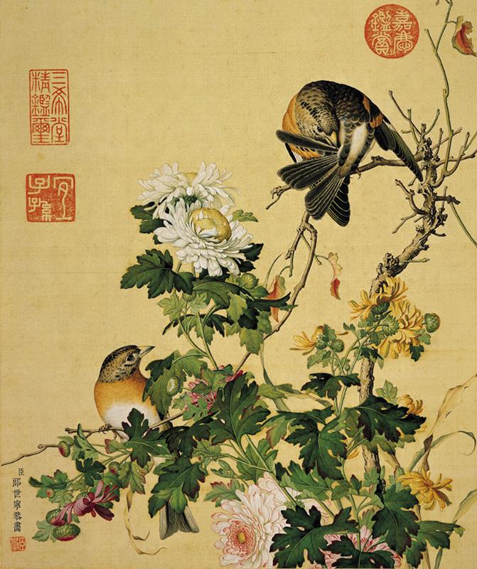 郎世宁《仙萼长春图册-菊花》