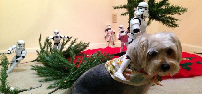 《星战》冲锋队与神犬MAX 帮美父子搭圣诞树