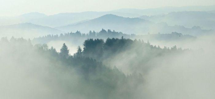 弯曲的森林 神秘无解的地貌景观